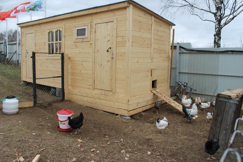 Секреты самостоятельного строительства зимнего курятника