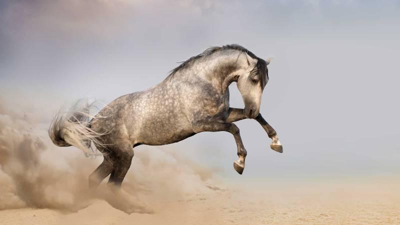 Чем примечательна андалузская лошадь