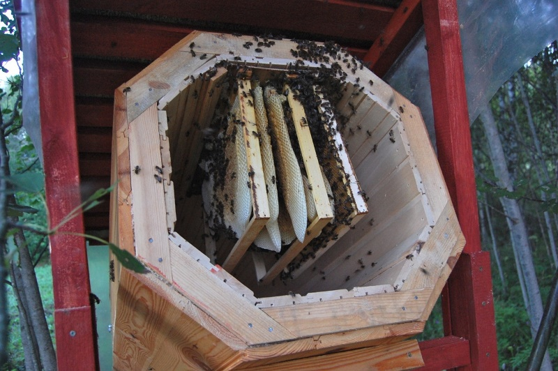 Как сделать колоды для пчел своими руками