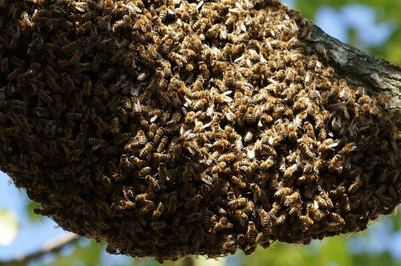 Что представляет собой мед диких пчел