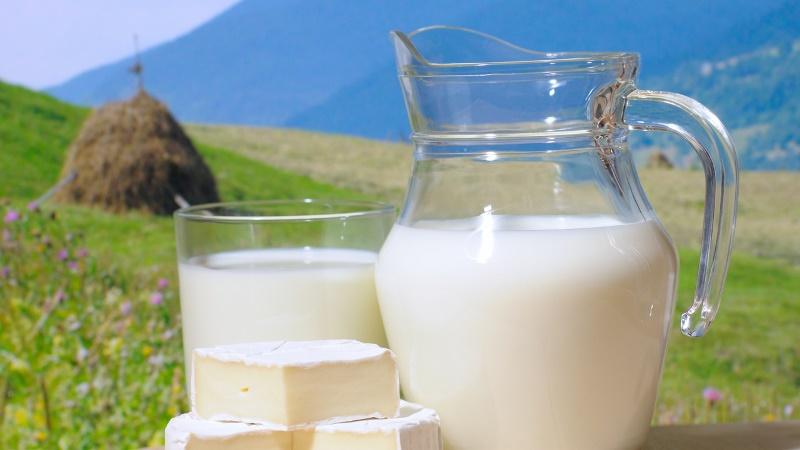 Какой должна быть жирность молока у коровы