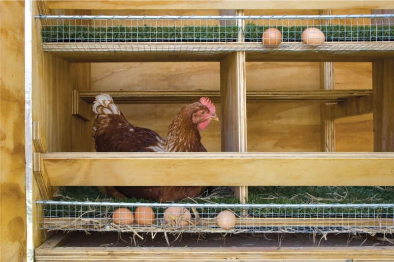 Клетка для кур и цыплят своими руками