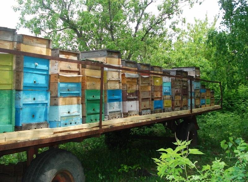 Платформа для кочевки пчел своими руками 32