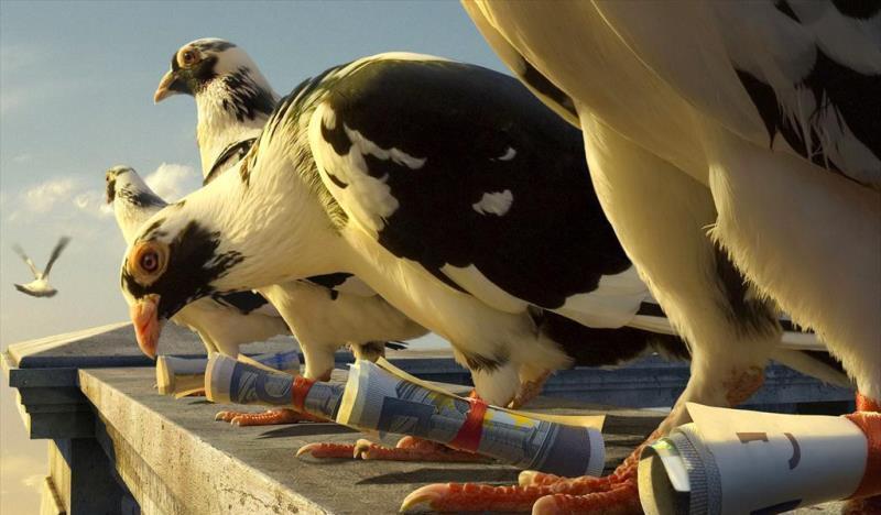 История и породы почтовых голубей
