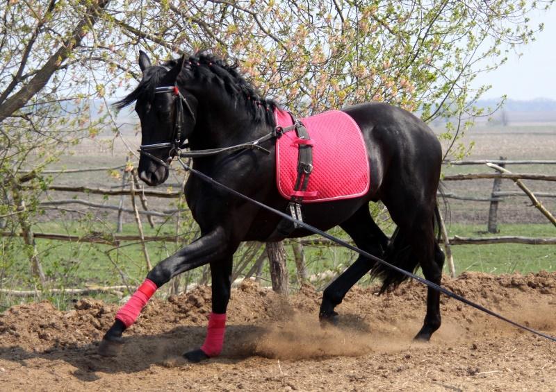 Что такое подкованная лошадь
