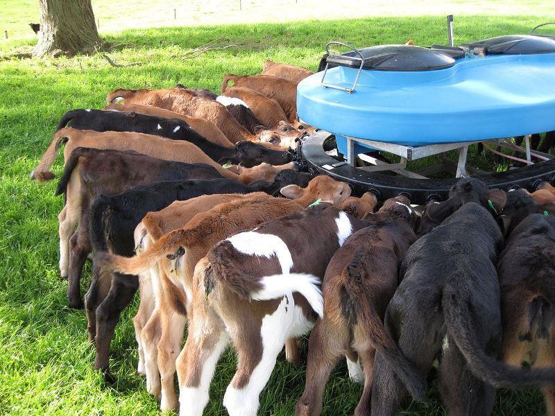 Как выбирать и устанавливать поилки для коров