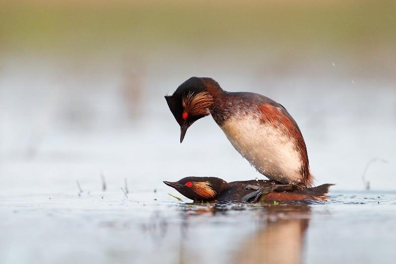 Орнитология: как размножаются птицы