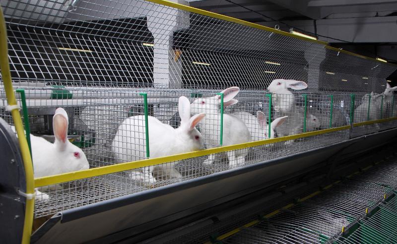Особенности выращивания кроликов