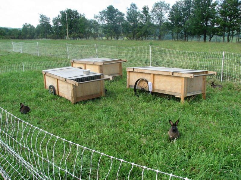 Кроличья ферма помещение своими руками 68