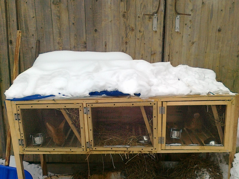 Правильное содержание кроликов зимой на улице