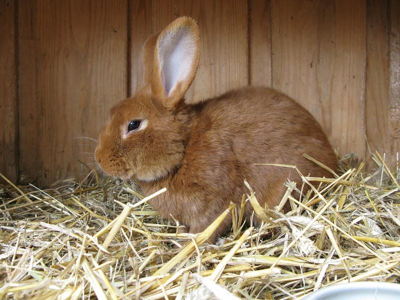 Особенности кролиководства в Белоруссии