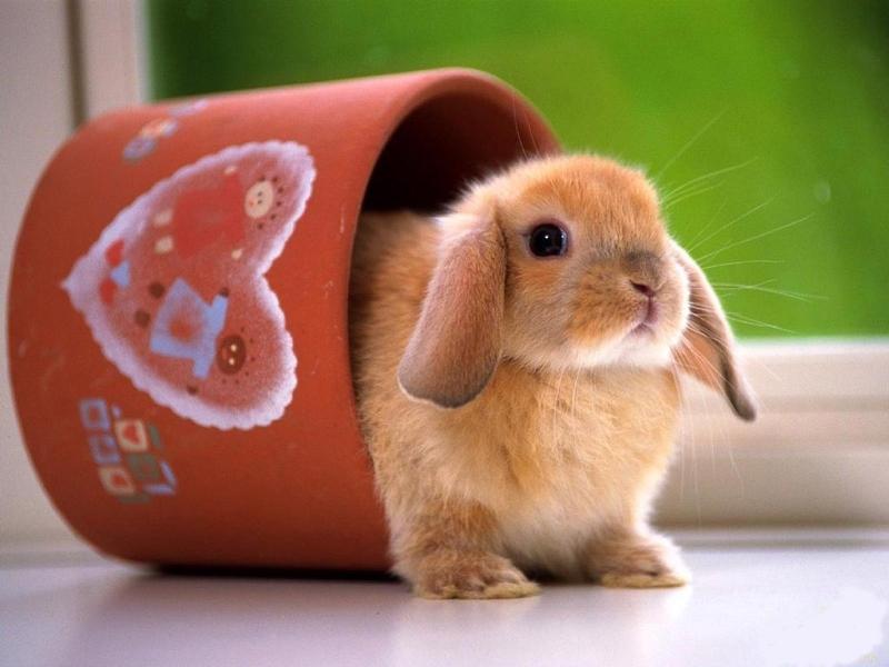 Как можно назвать кролика