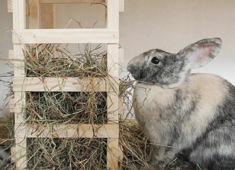 Кормушка для кроликов: сенник
