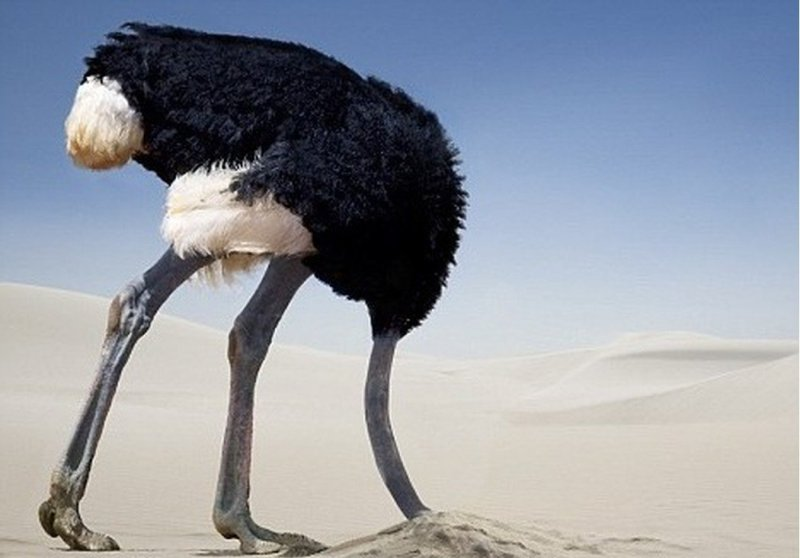 Почему страус, испугавшись, прячет голову в песок