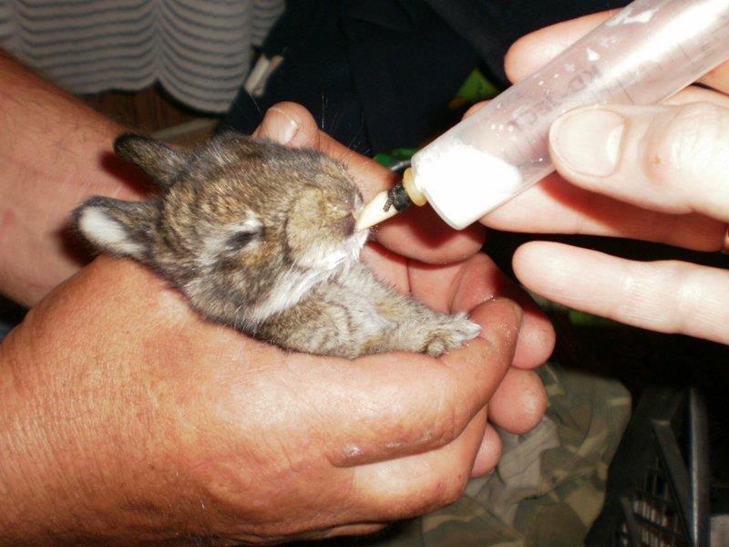 Как лечат домашних птиц и животных Трисульфоном