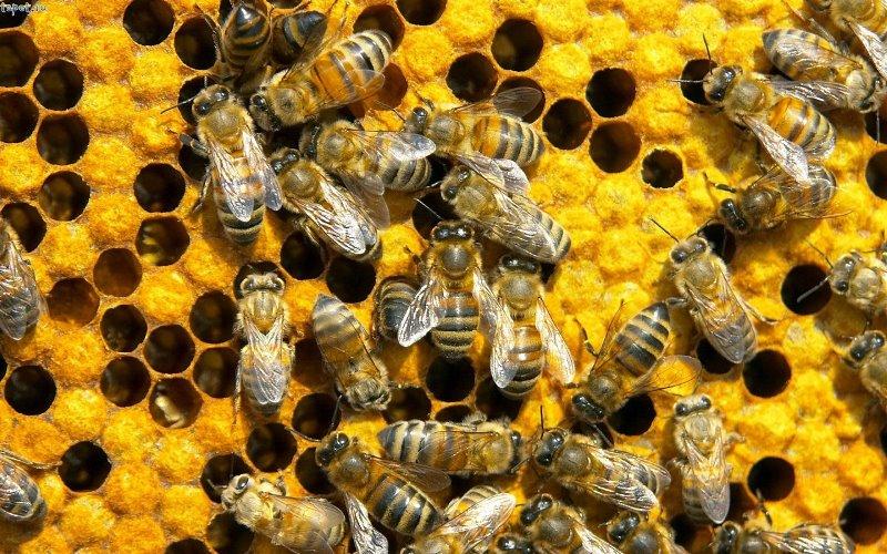 Процесс подготовки пчел к зиме