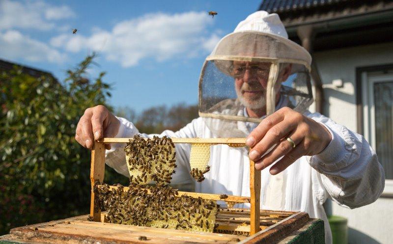 Распространенные болезни пчел и борьба с ними