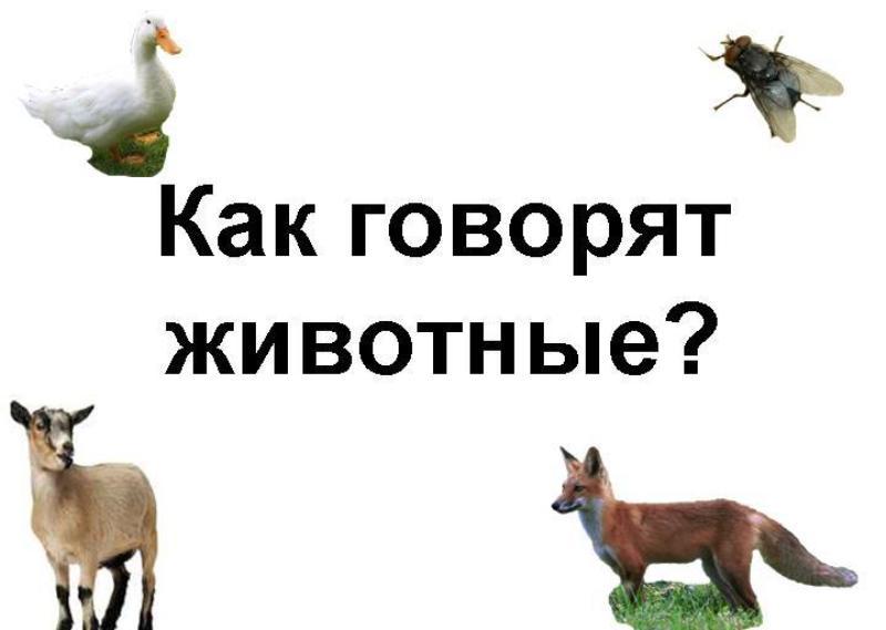 О чем говорят звуки животных