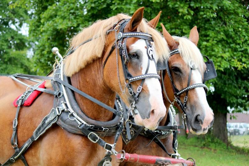 Что представляет собой телега для лошади