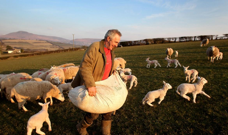 Частное фермерство и его развитие в переходный период