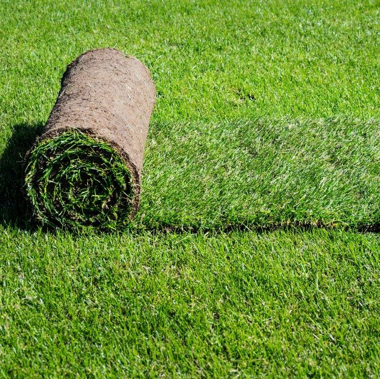 Рулонный газон: 5 главных преимуществ