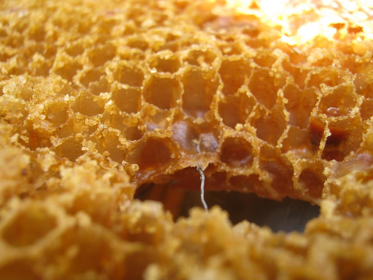 Воск пчелиный - узнай о его составе и свойствах