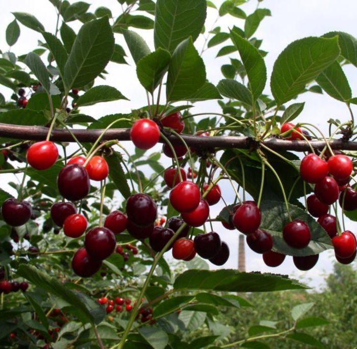 Питомник саженцев «Лучший сад» предлагает огромный выбор растений для озеленения участка