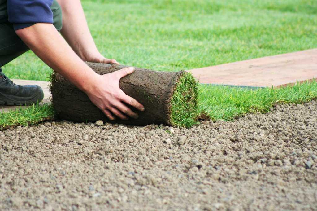 Рулонный газон - изящная альтернатива обычной траве