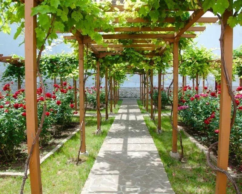 Чудо ягода на дачном участке. Сажаем виноград на даче