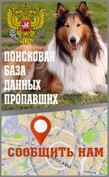 Как найти собаку которая убежала?