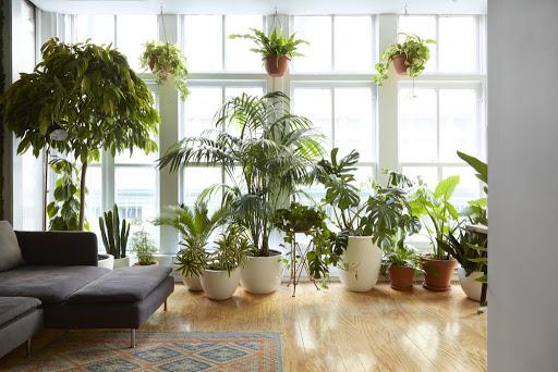 Где купить растения для квартиры и загородного участка
