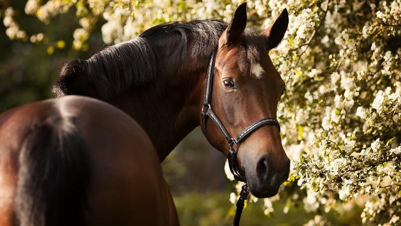 Разновидности гнедых лошадей
