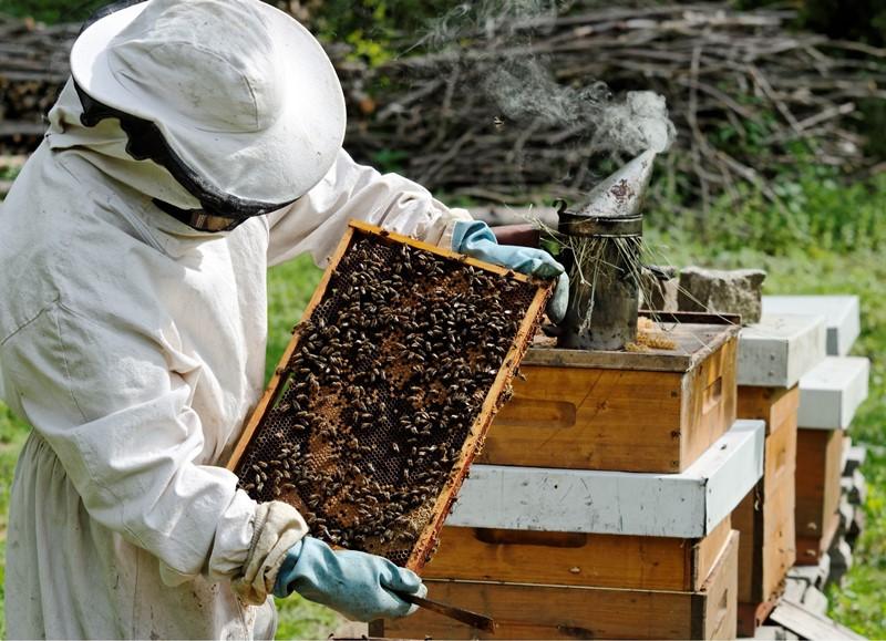 Изображение - Разведение пчел как бизнес pchelovodstvo-4