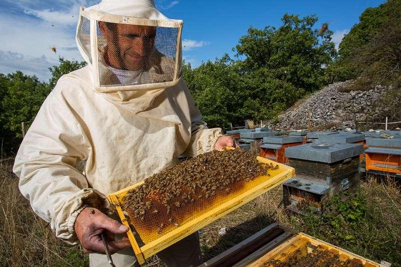 Изображение - Разведение пчел как бизнес pchelovodstvo-5