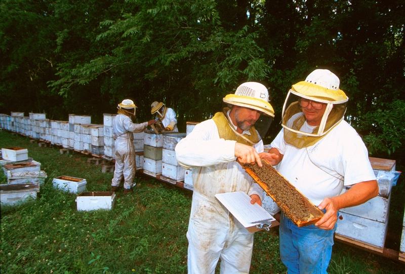 Изображение - Разведение пчел как бизнес pchelovodstvo-6