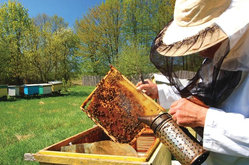 Изображение - Разведение пчел как бизнес pchelovodstvo-7
