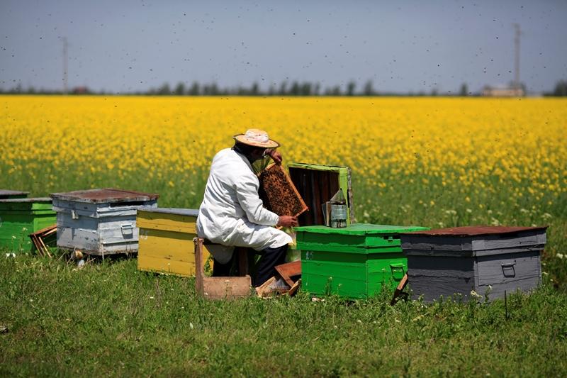 Изображение - Разведение пчел как бизнес pchelovodstvo-8
